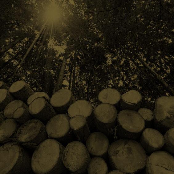 QRMS-arboriculture2